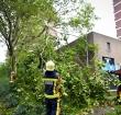 Brandweer verwijdert loshangende takken van boom