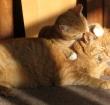 Vertroetel je kat op internationale kattendag