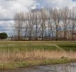 Tien miljoen voor aanpak bodemdaling Groene Hart