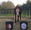Alphense dieren voorspellen uitslag Feyenoord-Ajax