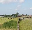 Grondwaterstand in veenweidegebieden kan omhoog