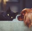 Kwalitatieve voeding voor jouw huisdier bij Brokkensuper