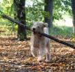 Afvallen en op gewicht blijven voor honden