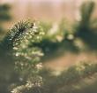 Gemeente zamelt kerstbomen in op 9 januari 2019