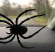 Politie opgeroepen voor gevaarlijke plastic spin