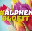 Centrumwinkeliers vieren de lente met #AlphenBloeit