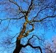 Bomenpanel denkt mee over Alphens bomenbeleid