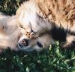 Hypoallergene, kwalitatieve voeding voor je huisdier
