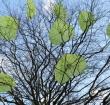 Enquête over bomenbeleid al 1.100 keer ingevuld