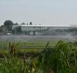 Verzilting water heeft gevolgen voor kwekerijsector