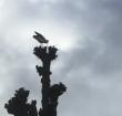 Ooievaar bouwt nest midden in Alphens stadshart