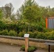 Groep jongeren plant stiekem boom in de Herenhof