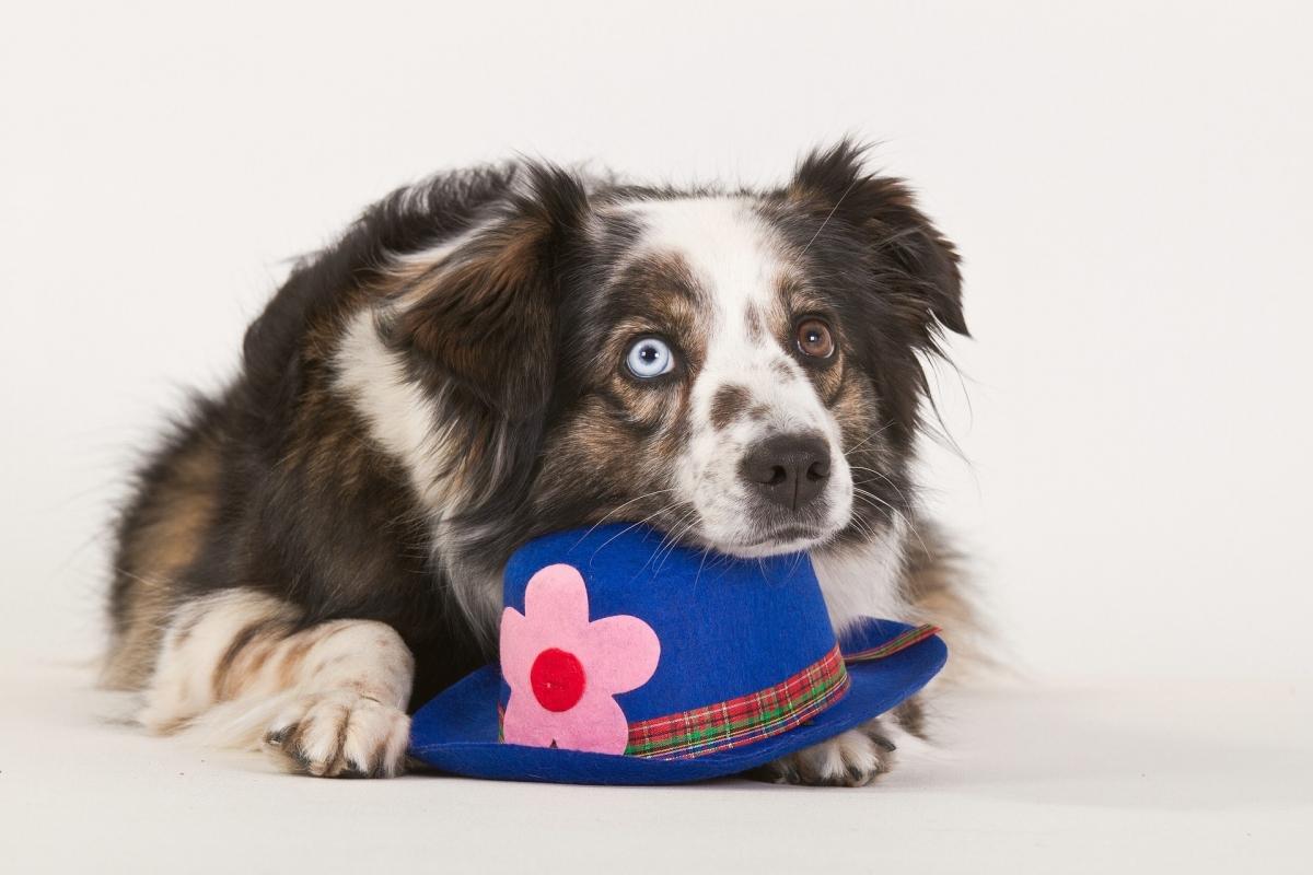 Dierendagnieuws: vegetarische voeding voor honden