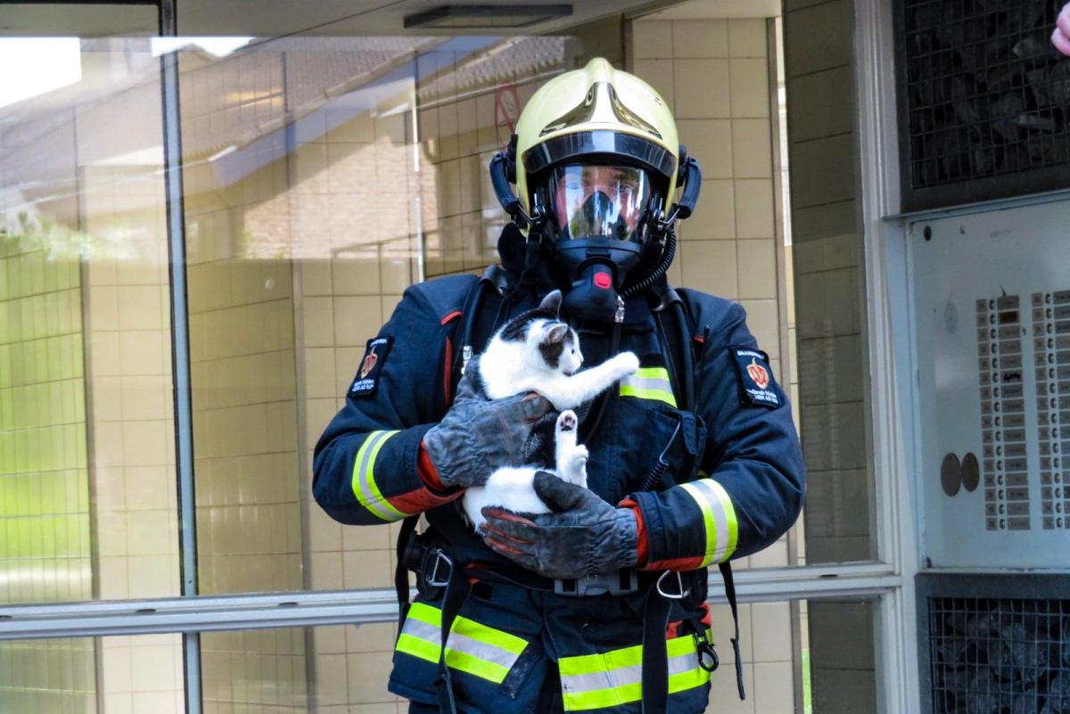 Kat gered bij woningbrand Plutostraat