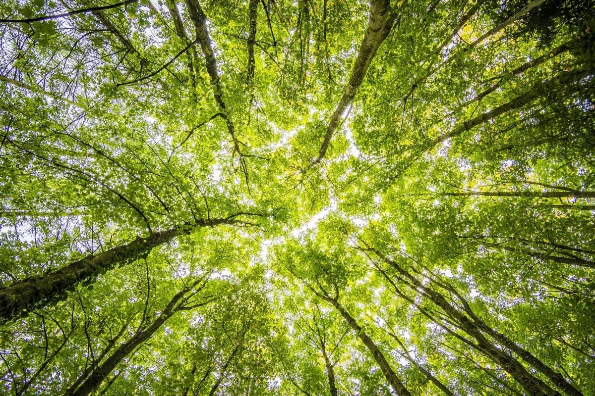 1.480 meningen over beschermwaardige bomen