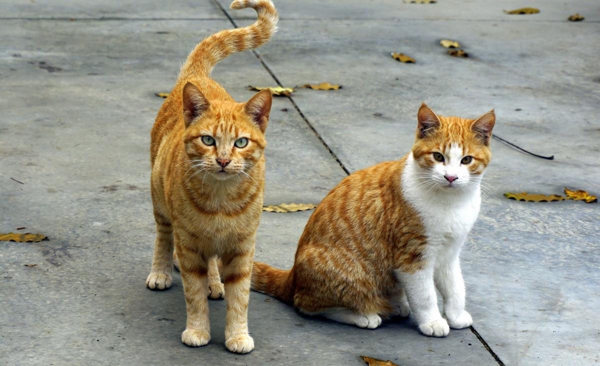 Drukte voor vrijwilligers dierenambulance in vakantie