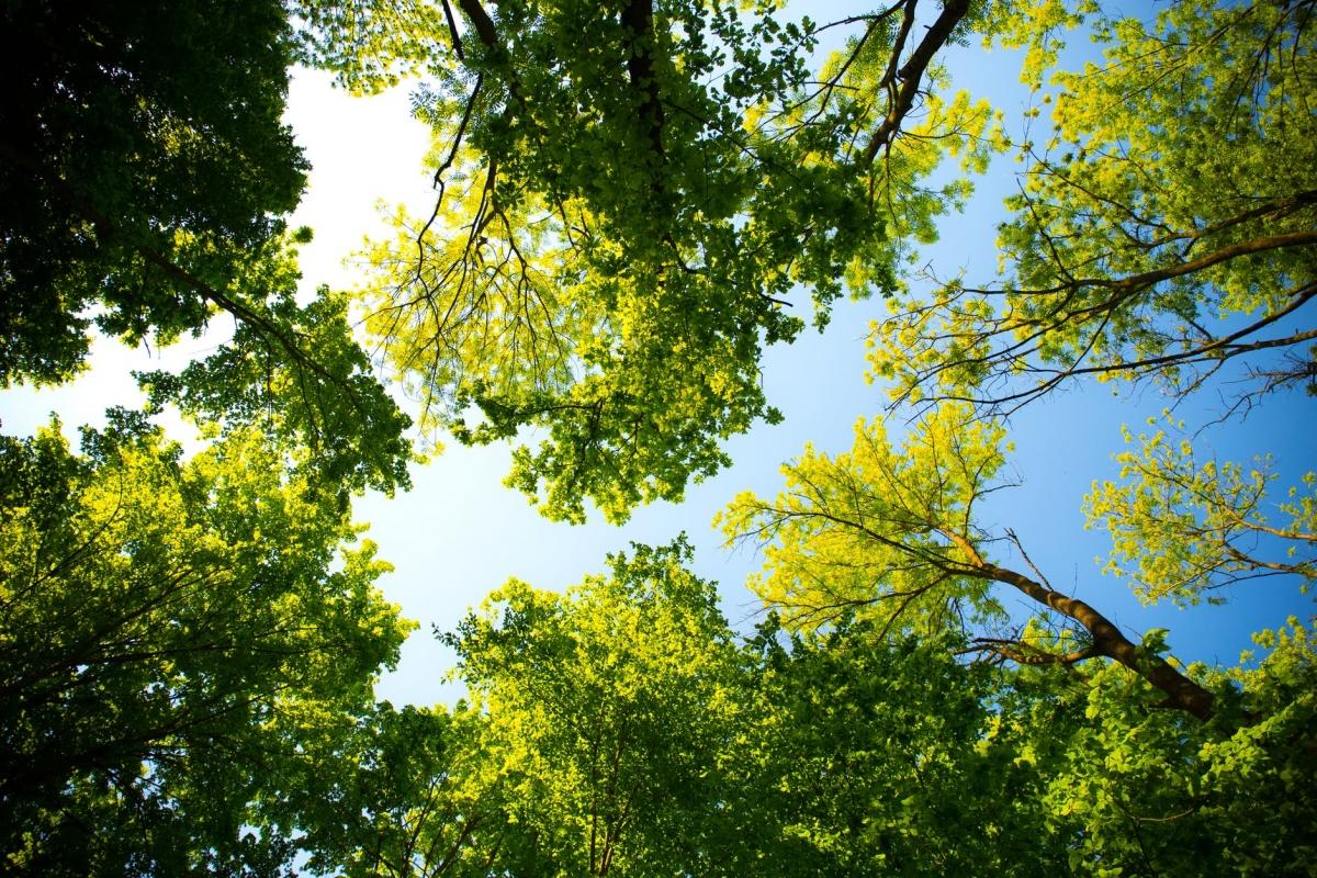 Alphens bomenpanel op zoek naar extra vrijwilligers