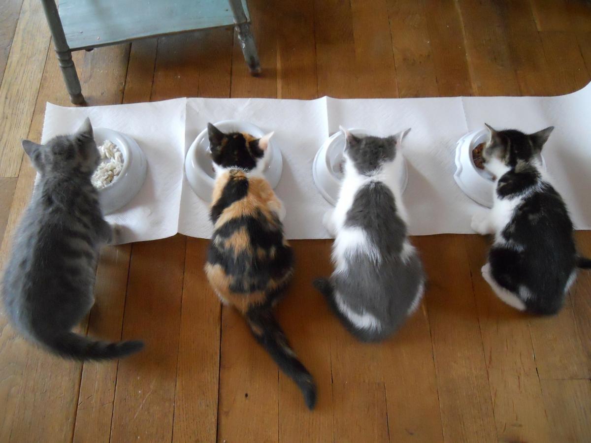 Ontdek de smaakvoorkeur van jouw kat met een proeverij