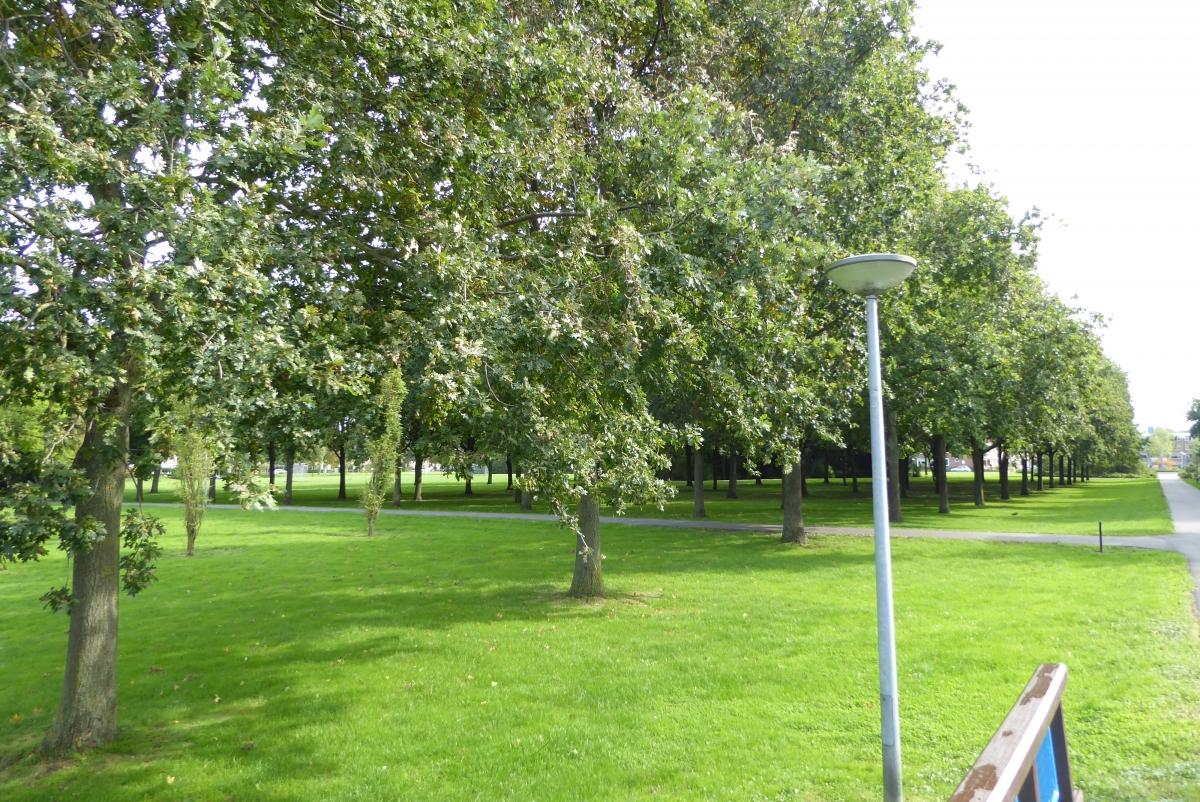 D66 Alphen vindt groen in de stad belangrijk