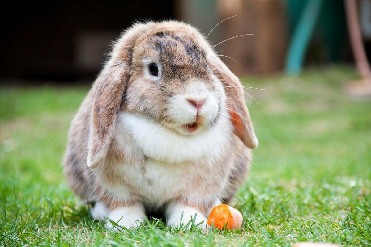 Natuurlijk konijnenvoer voor gelukkige konijnen