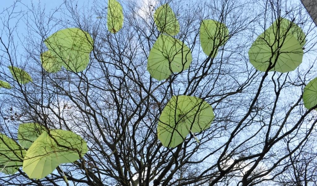 Achthonderd meningen over beschermwaardige bomen