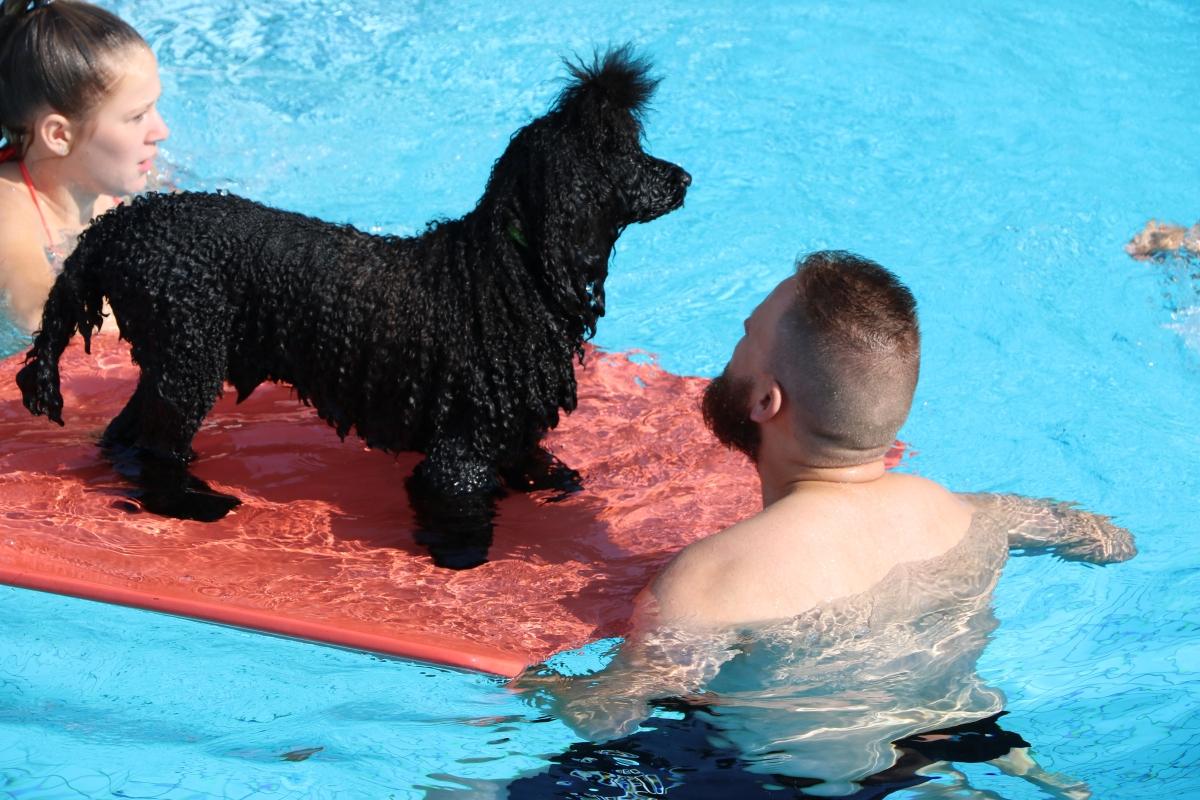De Hoorn sluit het zomerseizoen af met Hondenplons