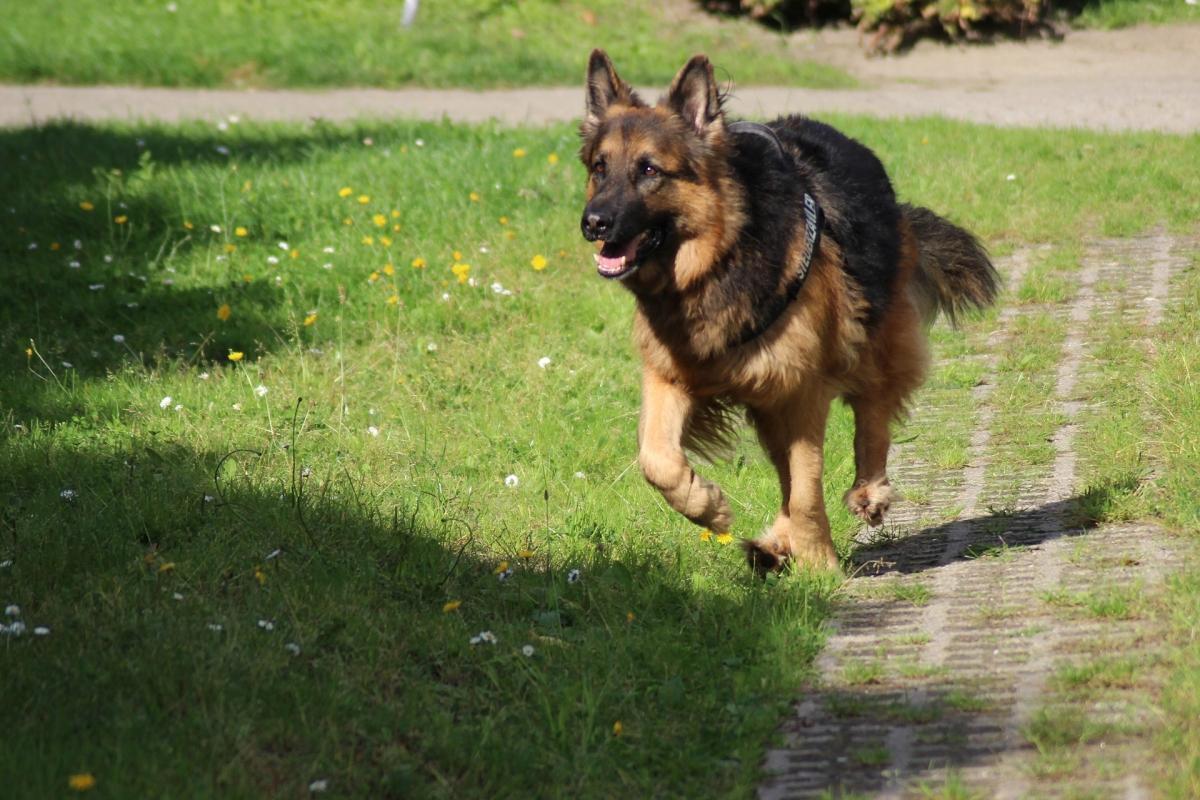 Nier- en urinewegproblemen bij honden oplossen
