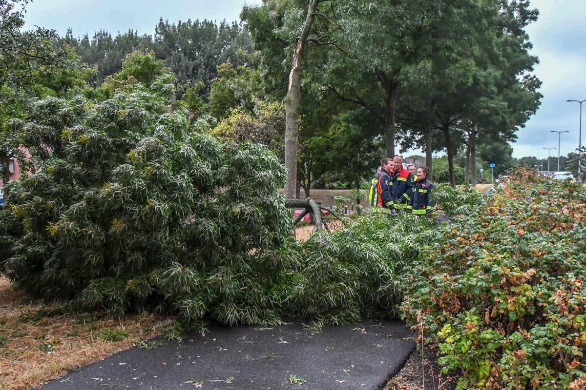 Wind krijgt boom op de President Kennedylaan omver