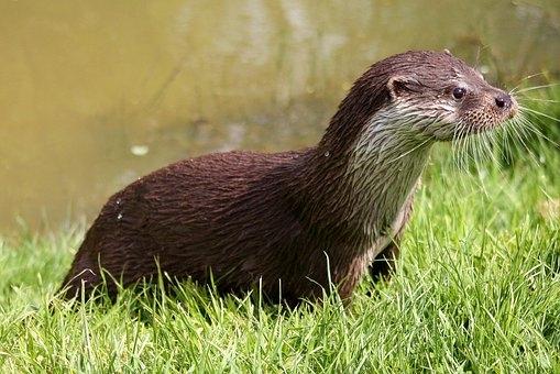 Oversteekplaats voor Otters aan Ziendeweg