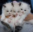 Brokkensuper heeft de ideale voeding voor jouw kitten